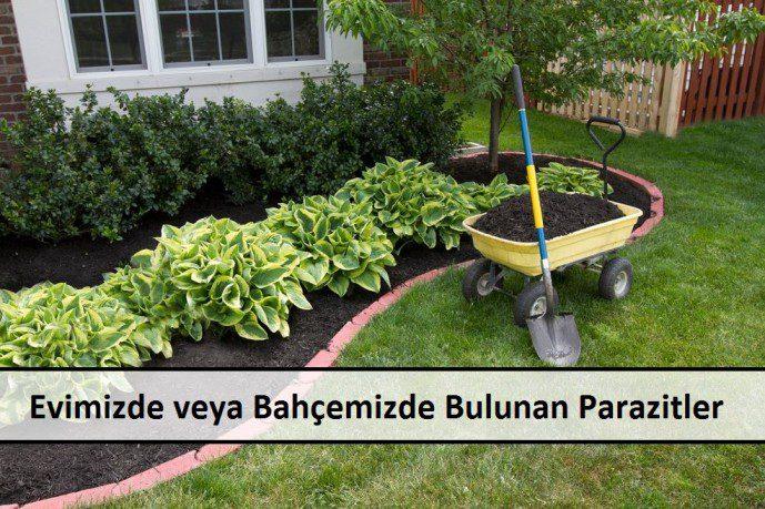 Evimizde veya Bahçemizde Bulunan Parazitler