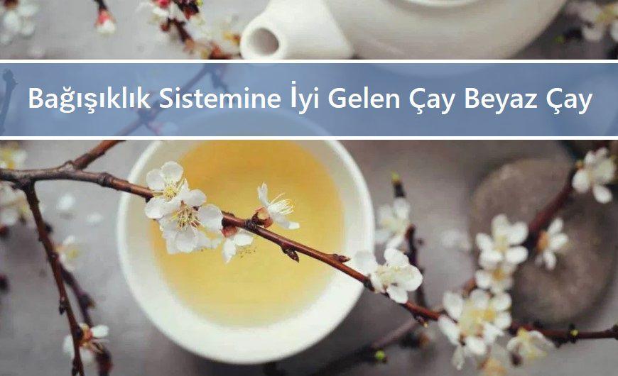 Bağışıklık Sistemine İyi Gelen Çay Beyaz Çay