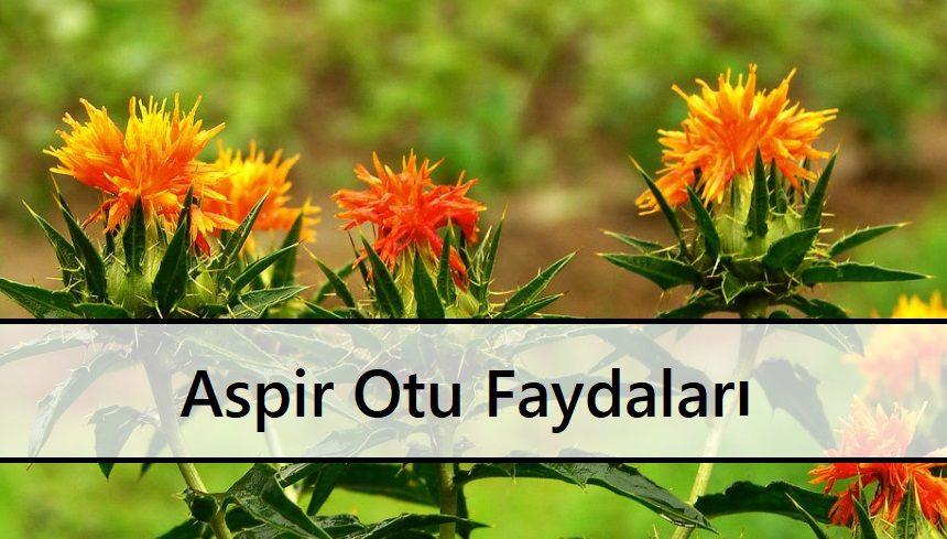 Aspir Otu Faydaları